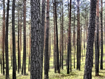 trees_sml