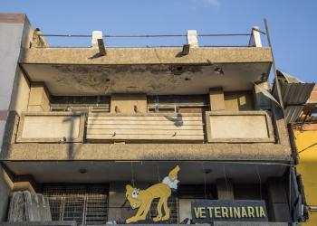 veterinaria_sml